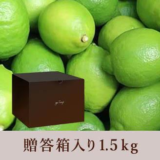 田坂農園 レモン 1kg 贈答箱入り 農園長セレクト