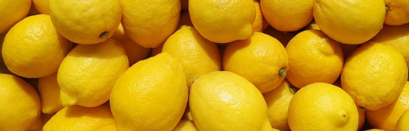 田坂農園 レモン イメージ