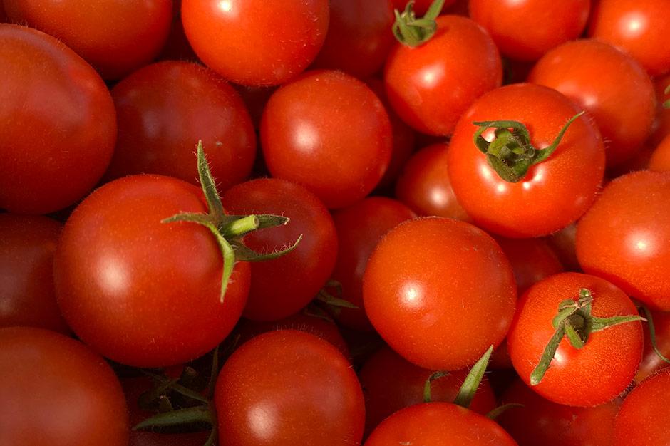 収穫したてのトマト。へたがピンと伸びている